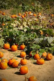 Pumpkin Patch Near Nolensville Tn by 23 Best Tullahoma Images On Pinterest Tennessee Tennessee