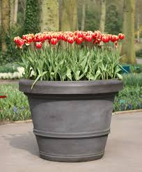 growing bulbs in outdoor containers garden bulb flower