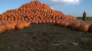 San Jose Pumpkin Patch 2015 by Despite Pumpkin Shortage Aloun Farms Expects Big Crowds For