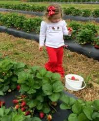 Pumpkin Patch Alabama Clanton by U Pick Guide For Chilton County 2017 Chilton County Extension