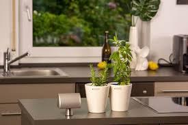 sommerlicher kräuter garten in der küche tiziano
