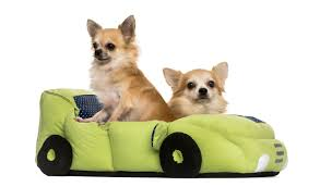 Top Rated Orthopedic Dog Beds by The Lowdown On Dog Beds Including Super Cool Designs