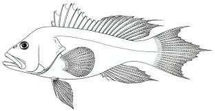 Fish Coloring Book Pdf Printable Pages For Adults Colouring Books Download