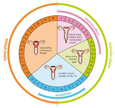 shedding uterine lining before period menstrual period blood clots 10 alarming facts to look out