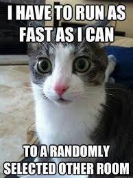 cat quotes cats best funniest cat quotes cat quotes cat and