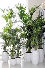 zimmerpflanzen für wenig licht 25 grüne und blühende arten
