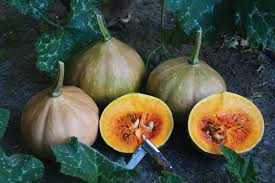 Pumpkin Patches Near Tallahassee Florida by Attack Of The Seminole Pumpkins Edible South Florida