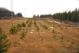 Christmas Tree Saplings For Sale by 120 Acre Farmland W Log Home Lg Barn Game Fencing Rr Spur In