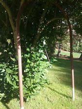 Unbranded Metal Garden Gates