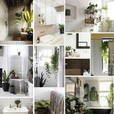 Plants For Bathroom Without Windows by Plants For Bathroom Without Windows 28 Images Plants In The