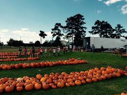 Nearest Pumpkin Patch Shop by 11 Awesome Pumpkin Patches In Louisiana