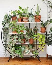 300 pflanzen arrangieren ideen in 2021 pflanzen