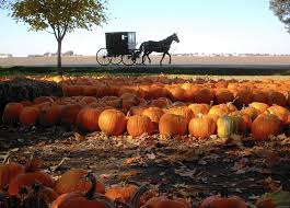 Best Illinois Pumpkin Patches by Great Pumpkin Patch Chicago Tribune