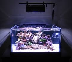 fish tank lighting ideas if fish tank lighting ideas u svadobne