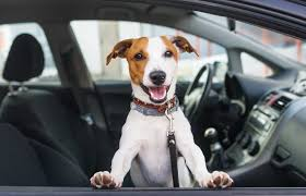 100 Craigslist Palm Springs Cars And Trucks Appointment For Your Dog I Give Pet Rides San Diego Reader