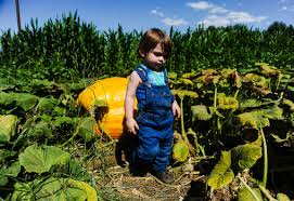 Pumpkin Patch Farm Temecula by Here U0027s Where To Pick Pumpkins At Patches From Redlands To Temecula