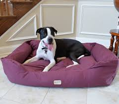 Wayfair Dog Beds by Dog Bolster Bed Korrectkritterscom