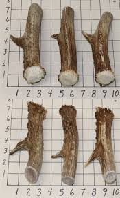 Moose Shed Antler Mounting Kit by 1251 Best Large Animals 177908 Images On Pinterest