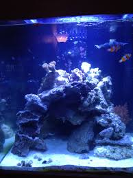 Aquascaping For 56 Gallon Tall | Saltwaterfish Forum Home Design Aquascaping Aquarium Designs Aquascape Simple And Effective Guide On Reef Aquascaping News Reef Builders Pin By Dwells Saltwater Tank Pinterest Aquariums Quick Update New Aquascape Of The 120 Youtube Large Custom Living Coral Nyc Live Rock Set Up Idea Fish For How To A Aquarium New 30g Cube General Discussion Nanoreefcom Rockscape Drill Cement Your Gmacreef Minimalist 2reef Forum