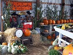 Pumpkin Patch Avon Ct by Pick Your Own Pumpkins In Connecticut Local Food Guide Ct