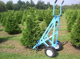 Leyland Cypress Christmas Trees Louisiana by Something To Grow On