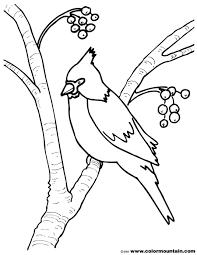 Cardinal Bird Coloring Pages