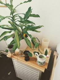 neue pflanzenecke am bett schlafzimmer pflanzen