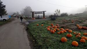 Pumpkin Patch Issaquah by Two Brothers Pumpkins Home Facebook