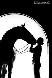 Country Tyme Sheds Hatfield by 213 Best B U0026w Horses Images On Pinterest Horses Beautiful Horses