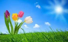 Beautiful Flower Hintergrundbilders For Desktop Animated Viewing Galerie Nature Hintergrundbilder Mobile Windows