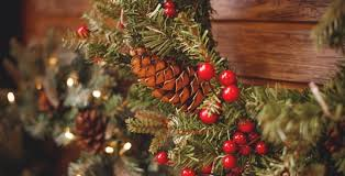 What Is The Best Christmas Tree Variety by Christmas Around The Farm U2013 Linvilla Orchards