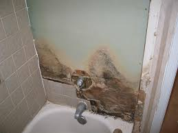 how to remove mold and detect it s early signs remove mold and walls