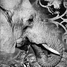 glasbild 50x50cm wohnzimmer elefant leopard