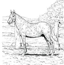 Printable Arabian Horse Coloring Pages Racing Page Rocking Horses Full Size