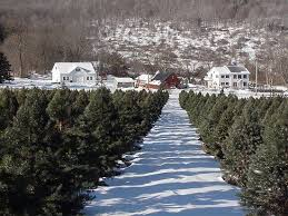 Santa Cruz Ca Christmas Tree Farms by 46 Best Christ Winter Tree Farms U0026 Lots Images On Pinterest