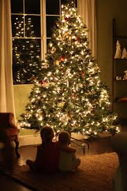 Potted Christmas Tree by 54 Best Merry Little Moments Images On Pinterest Christmas Time