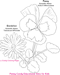 Flower Coloring Pages Free Candy
