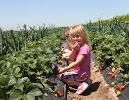 Tanaka Pumpkin Patch Irvine by Discounted Strawberry Picking U2013 Tanaka Farms Open House Plan A
