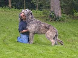 30 Dog Breeds That Shed The Most by 101 Facts About Dogs You Might Not Know Care Com Community