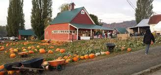 Snohomish County Pumpkin Patches by Bob U0027s Corn U0026 Pumpkin Farm Snohomish Roadtrippers