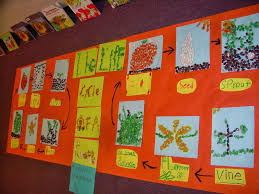 Life Cycle Of A Pumpkin Seed Worksheet by Ms Lewis U0027 2nd Grade Class Cycles In Nature