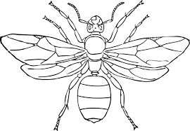 Insect Coloring Pages Wasp
