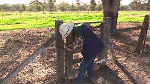 Cowboy Bed Roll by Cowboy Ranch Hand Walking On Road On Horse Ranch Fence With Bed