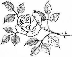 Easy Roses Bouquet Drawings Rose Flowers Drawing Easy Rose Drawings In Black And White Bouquet