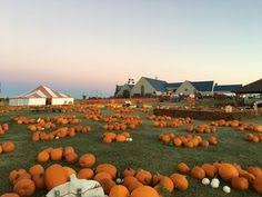 Pittsburgh Area Pumpkin Patches by Fall Festivals In Pittsburgh Area Pennsylvania Pinterest