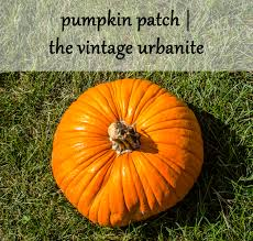 Pumpkin Patches Columbus Oh by Pumpkin Patch Snapshots U2013 The Vintage Urbanite