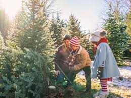 Silver Tip Christmas Tree Los Angeles by Best Christmas Tree Farm Spots Sunset