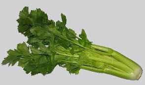 cuisiner celeri cuisiner le celeri 100 images poêlée au céleri branche le