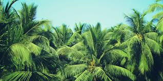 How To Grow And Care For Palm Trees | Bunnings Warehouse