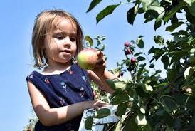 Apple Pumpkin Picking Syracuse Ny by Apples Arrive In Central New York Where To Pick And Buy
